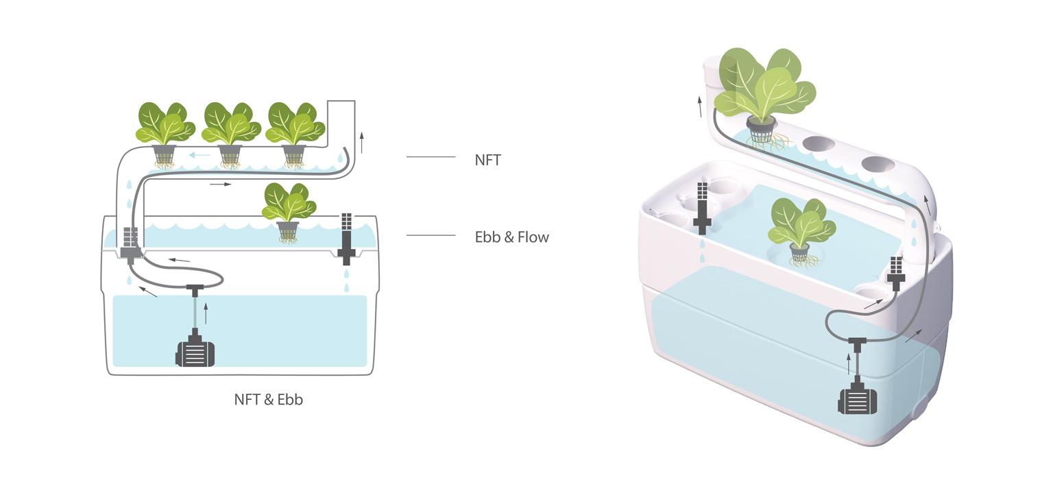 NFT&Ebb-new